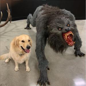 dog vs werewolf