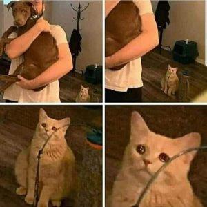 Sad Cat Holding Dog